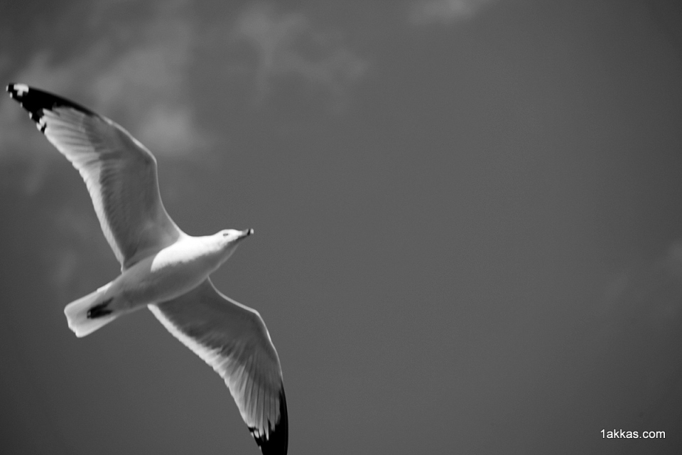 [1akkas.com] two wings and a single wish